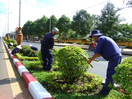 Chăm sóc cây đường phố, cây KCN, nhà máy
